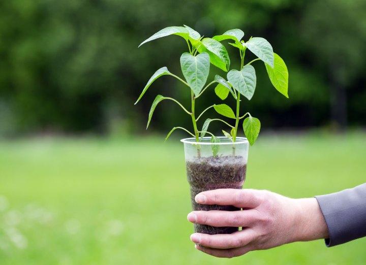 start-seeds